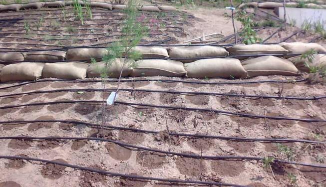 Zavlažování svahu s výsadbou kapkovacím potrubím na rozloze asi 900 m².