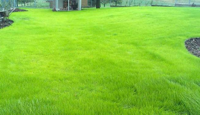 Tenhle trávník se tedy povedl. Takto vypadá zhruba po 4 týdnech.