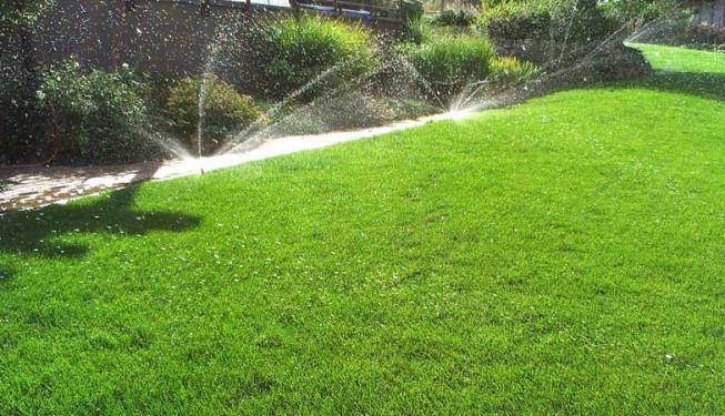 Na této zahradě je trávník skvěle zapěstovaný a hustý.
