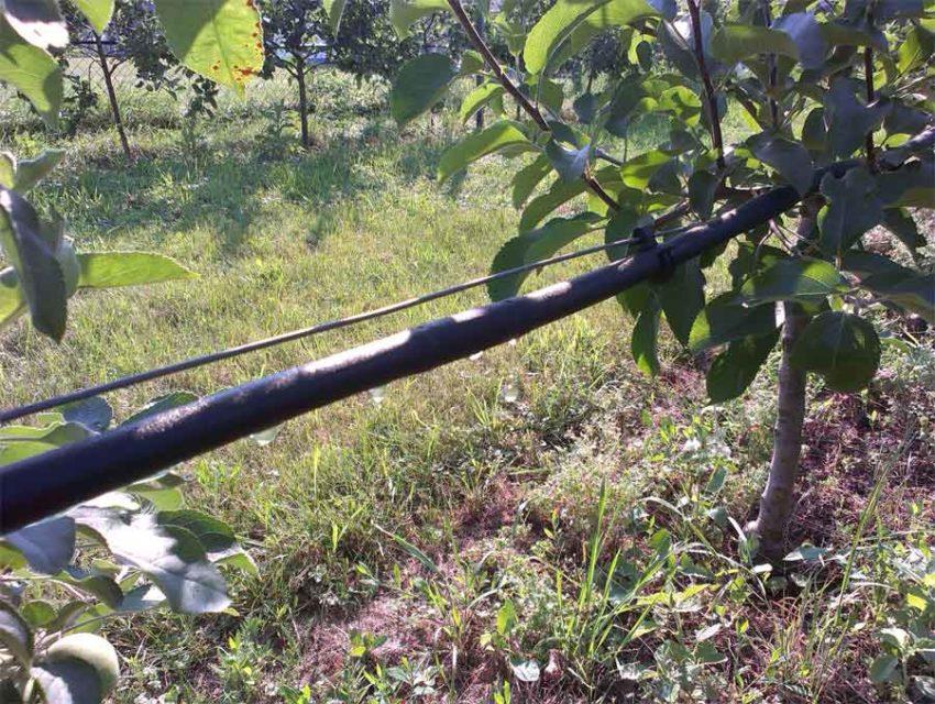 Zavlažovaní sadu kapkovacím potrubím v závěsu.