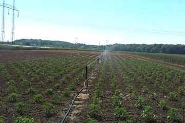 Zemědělství & Skleníky