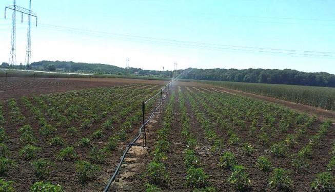 """Zavlažování zemědělské plochy - plošná závlaha \""""Shrub Head\"""""""